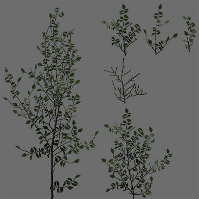Name:  leaves01.jpg Hits: 240 Größe:  99,8 KB
